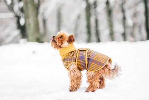 개를 따뜻하게 해 주는 5가지 방법