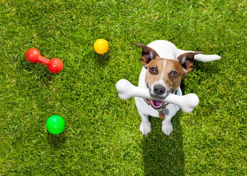 강아지의 장난감