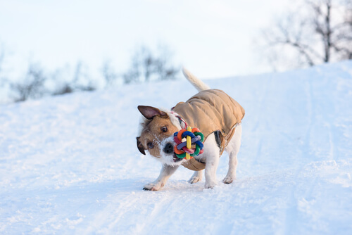 개는 왜 장난감을 흔들까?