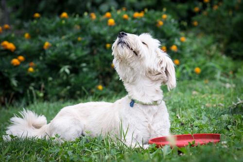 개가 제일 싫어하는 냄새 5가지