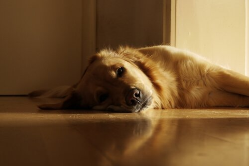 개가 햇볕 아래 눕는 이유