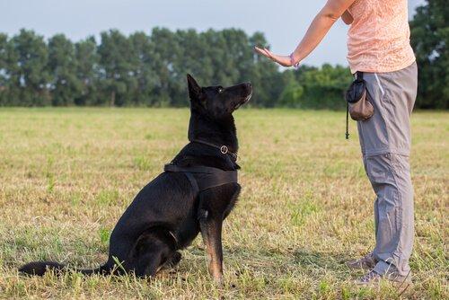 반려견 긍정 훈련 개에게 사랑을 표현하는 5가지 방법