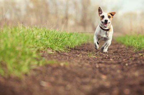 개에게 사랑을 표현하는 5가지 방법 긴 리드줄