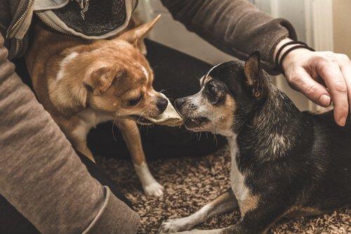 반려동물의 질투를 어떻게 예방하고 다루어야 할까?