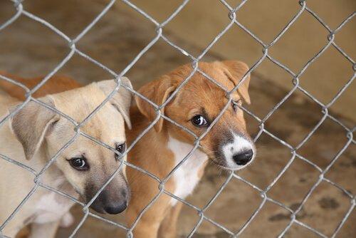 불법 사육장에서 구출된 100마리 이상의 개