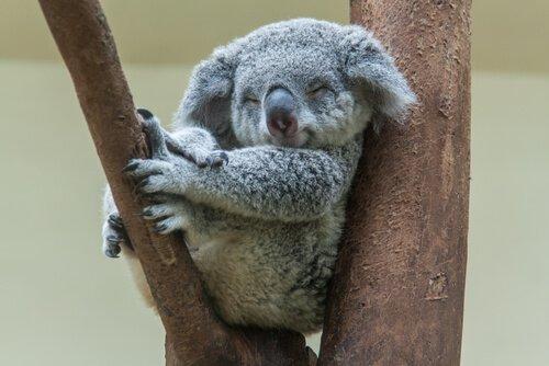 세상에서 잠을 가장 많이 자는 동물 5종