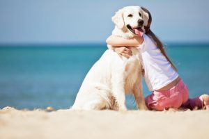 개는 주인의 감정을 알 수 있다
