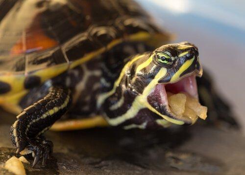 거북에게 먹이 주는 법