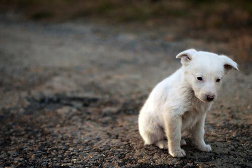 길 잃은 개를 성공적으로 구출하는 법
