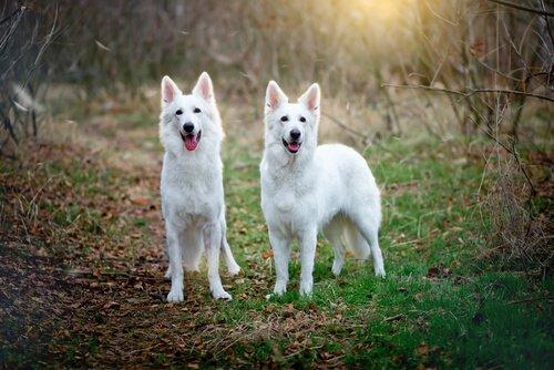 암컷 개가 다른 암컷 위에 올라타는 이유