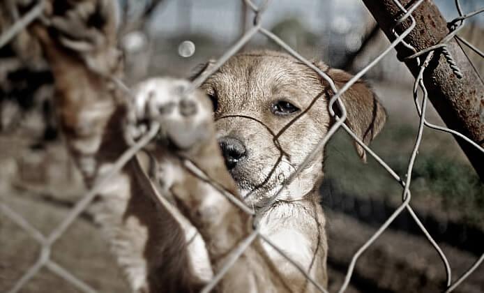 동물 학대를 목격하면 해야 할 일