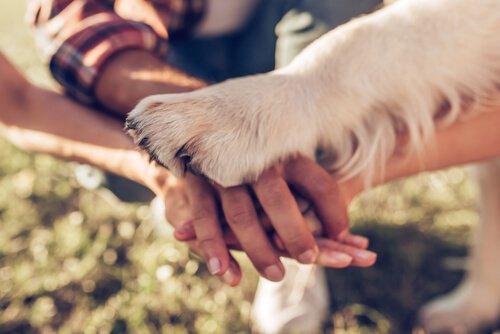 개에게 사랑을 표현하는 5가지 방법