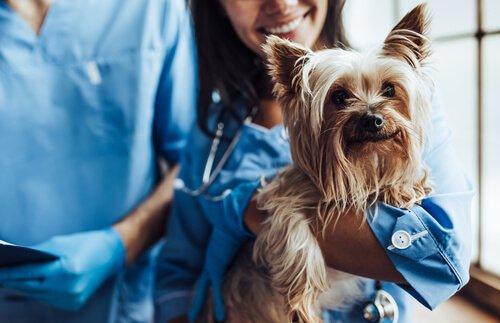 반려동물 중성화 수술의 5가지 이점