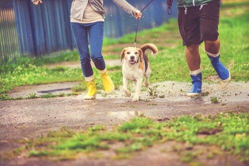 비 오는 날 반려견을 산책시키는 방법