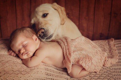 반려동물에게 아기를 소개하는 법
