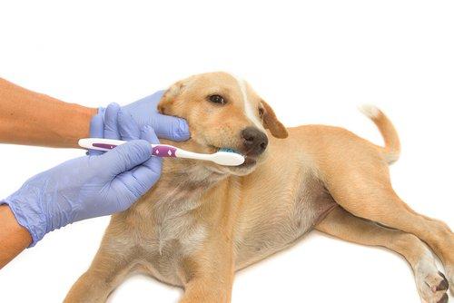 반려견의 이빨 관리에 가장 좋은 제품 6가지