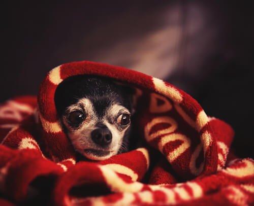 태풍이 올 때 개를 진정시키는 법
