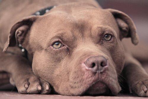 자동차에 갇혔다가 구조된 개, 동물 보호소에서 회복하다