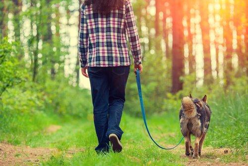 반려견과의 즐거운 산책을 위한 4가지 수칙