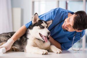 개가 아프지 않도록 하는 10가지 팁