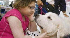 치료견은 입원한 어린이를 어떻게 도와줄까? 캐나다 병원의 치료견