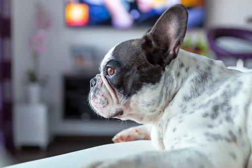 개도 TV를 볼까? 공포 영화를 좋아하는 개의 이야기