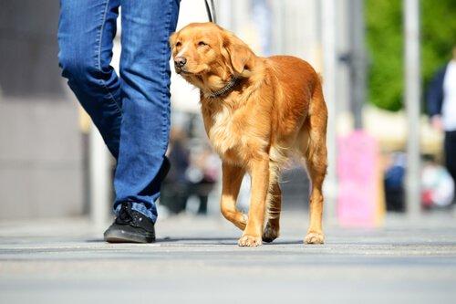 개를 산책시킬 때 피해야 할 위험 요소들