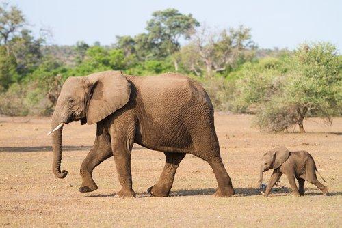 아기 코끼리를 구조한 후 직접 입양한 사람