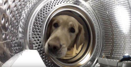 세탁기에서 친구를 구출한 개