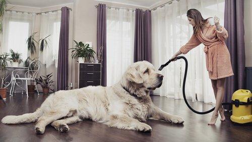반려동물이 있어도 집 안을 깨끗하게 유지하는 비결