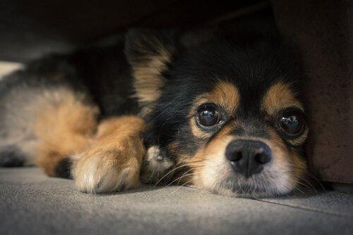 왜 개에게 수염이 있을까?