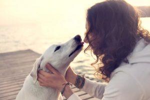 개가 당뇨병을 판별할 수 있다