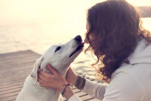반려견이 당신을 이해한다면 더 많이 사랑할 것이다