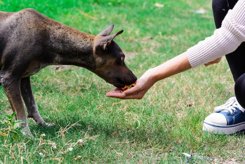 개에게 가장 적절한 처벌 방법은 무엇일까?