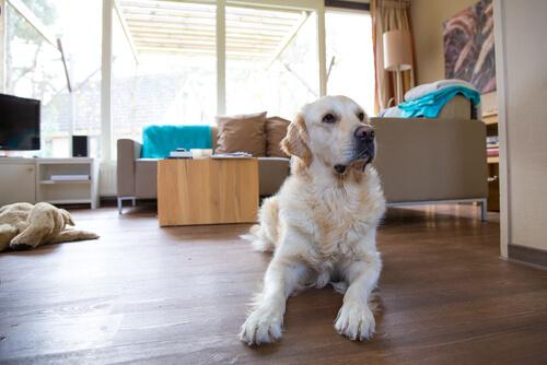 집 안에 흩날리는 개털을 청소하는 방법