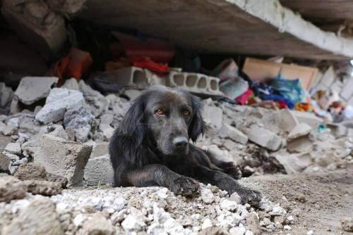 에콰도르의 지진: 집을 떠나지 않는 개