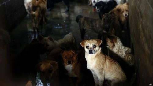 중국의 개고기 축제를 규탄한다