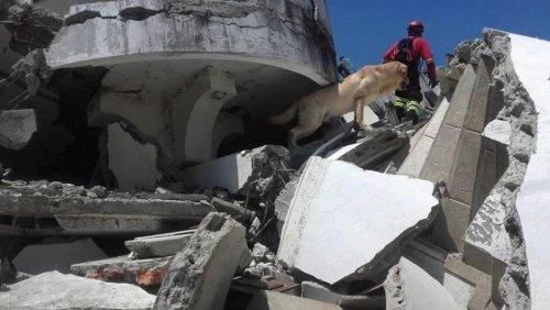 에콰도르 지진에서 활약한 영웅 구조견의 이야기