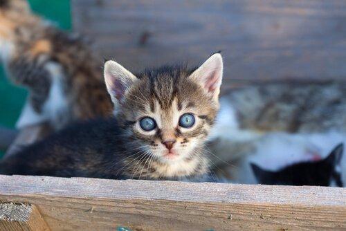 고양이를 입양해야 하는 이유 9가지
