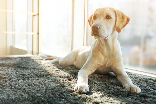 개는 중성화 수술 후에 성격이 어떻게 바뀌는가?