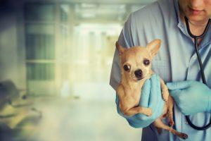동물들에게 희망을 주는 새로운 병원