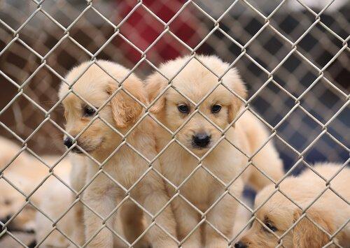 강아지 공장에 반대한다