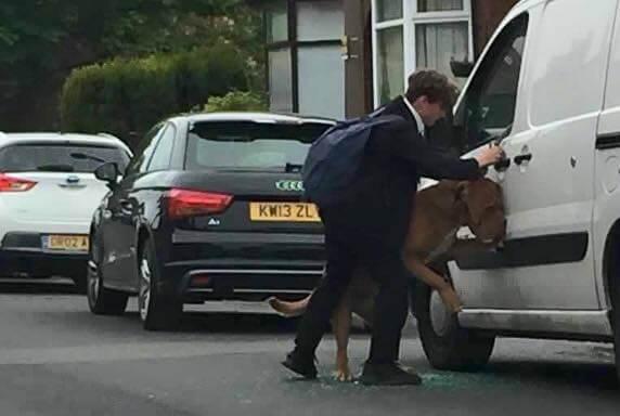 목줄에 질식할 뻔한 개를 구한 학생