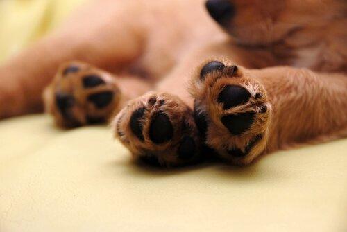 반려동물의 발바닥에 난 상처는 어떻게 치료할까?