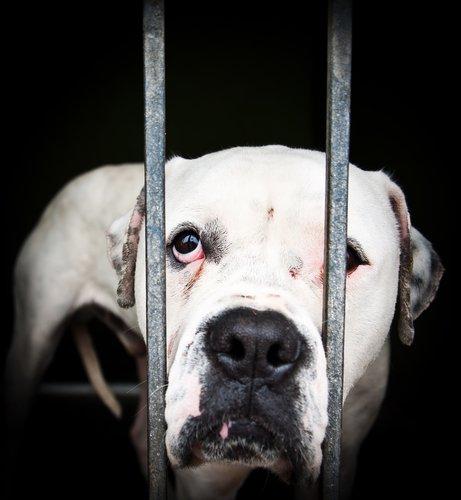 인터넷에서 목격하는 동물 학대를 어떻게 신고할까?