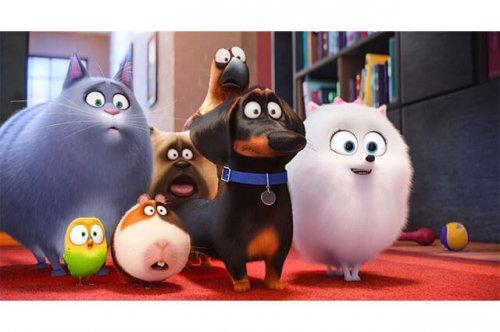반려동물에 관한 영화 '마이펫의 이중생활'