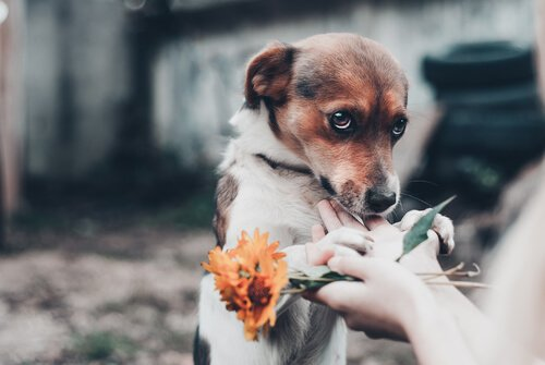 개가 천둥을 무서워하면 어떻게 해야 할까?