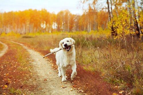 개를 산책시키기에 가장 좋은 시간