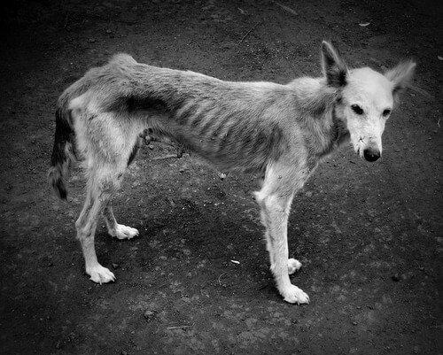 나쁜 식습관 때문에 개에게 생길 수 있는 질병