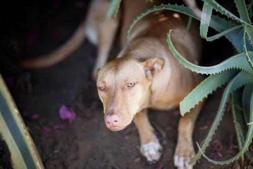 알로에베라가 반려동물의 건강에도 좋은 이유